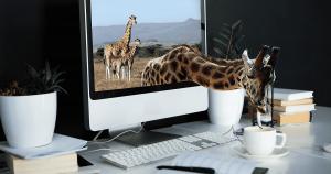 Giraffen i rummet Joachim Berggren Kommunikation